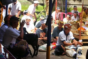 Animal Sacrifice in Balinese Religion